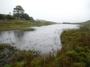 Kelly Hall Tarn and Long Moss Tarn (24)
