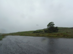 Kelly Hall Tarn and Long Moss Tarn (28)