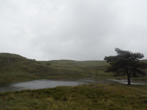 Kelly Hall Tarn and Long Moss Tarn (4)