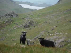 Lever's Water, Seathwaite Tarn, Blind Tarn, Goat's Water (117)