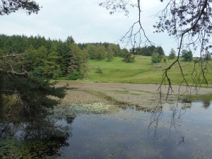 Out Dubs Tarn - Esthwaite Water 113
