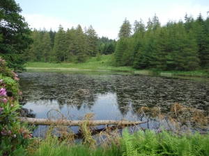 Out Dubs Tarn - Esthwaite Water 117