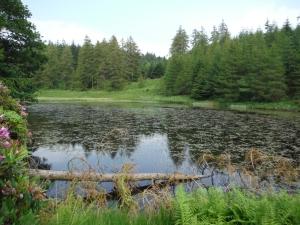 Out Dubs Tarn - Esthwaite Water 117